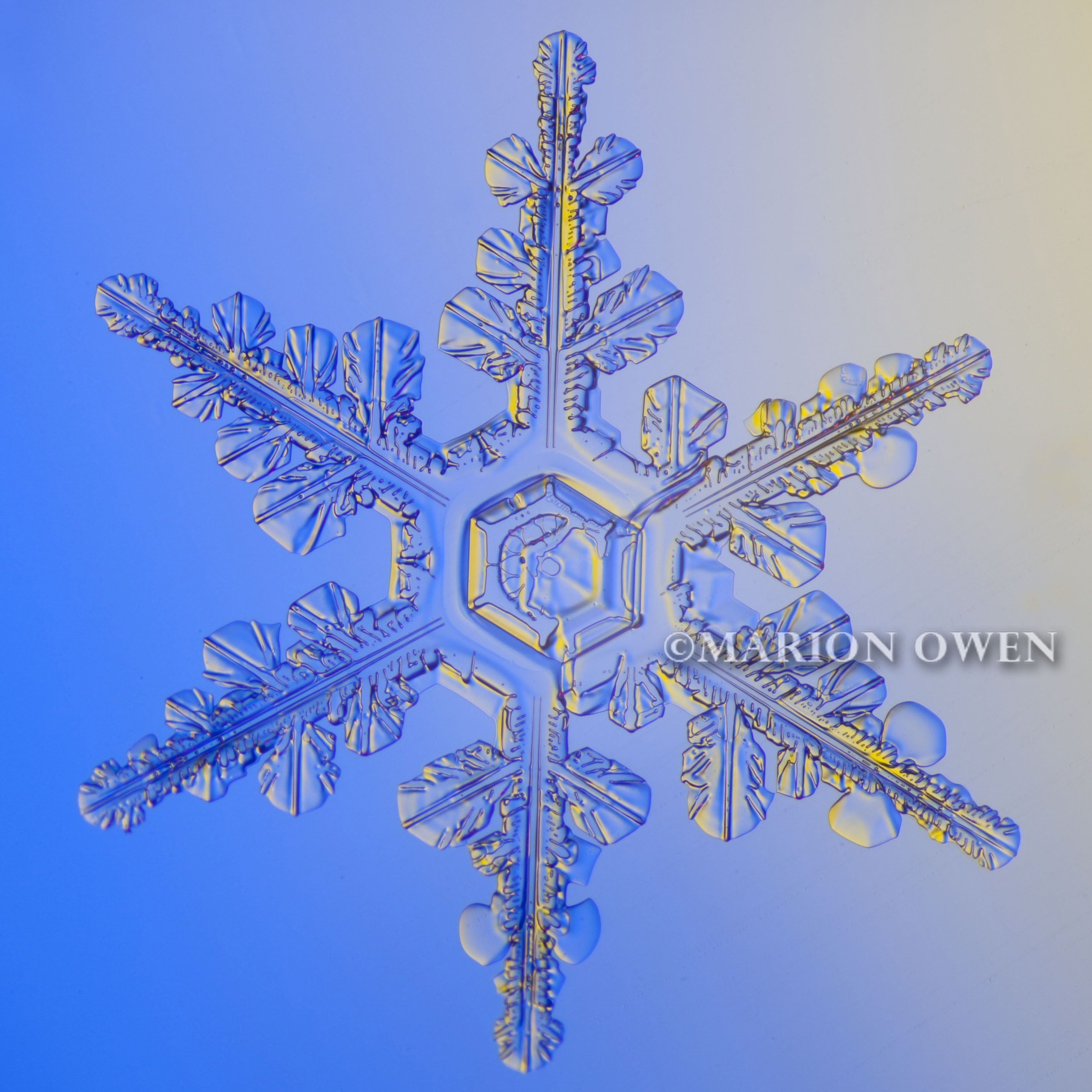 people are like snowflakes Twelve free printable snowflake templates to fold and cut into beautiful paper snowflakes.