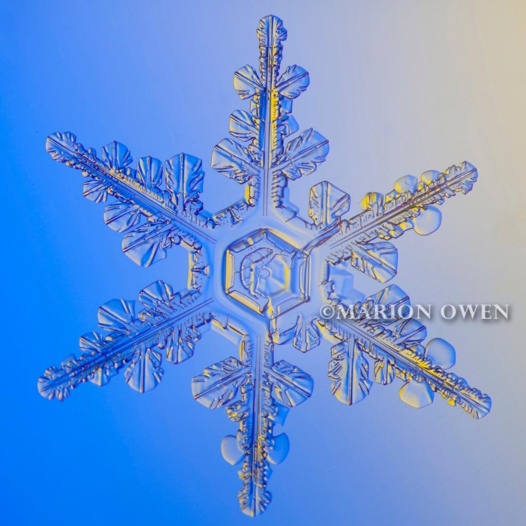 snowflake, snow crystal, flake, winter, kodiak, alaska, photograph, photography