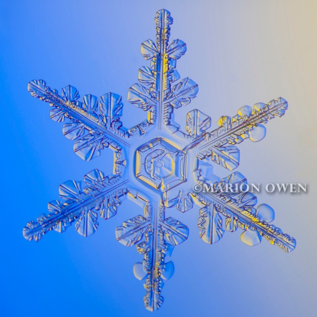 snowflake, snow crystal, flake, winter, kodiak, alaska, photograph, photography