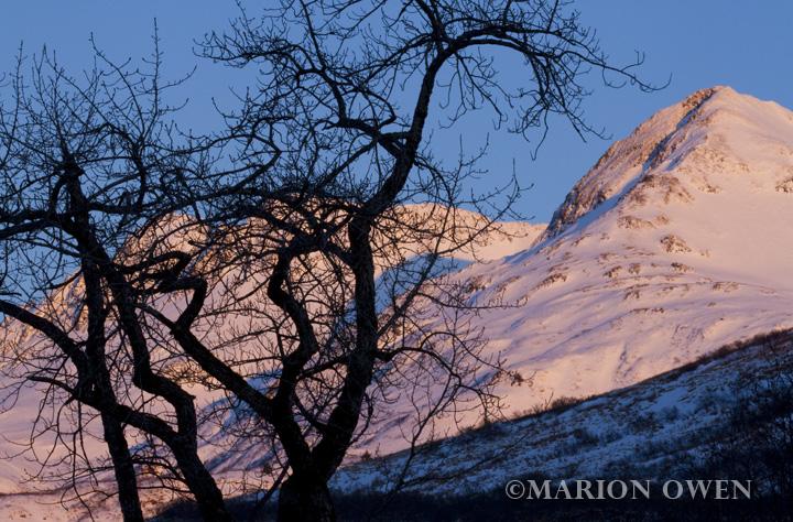 Cottonwood, tree, Kodiak, Island, Alaska, plants, sunrise