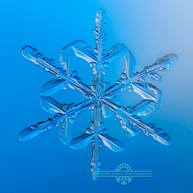 Snowflake, snow crystal, winter, ice, snow, photograph, macro, Kodiak, Alaska, cold