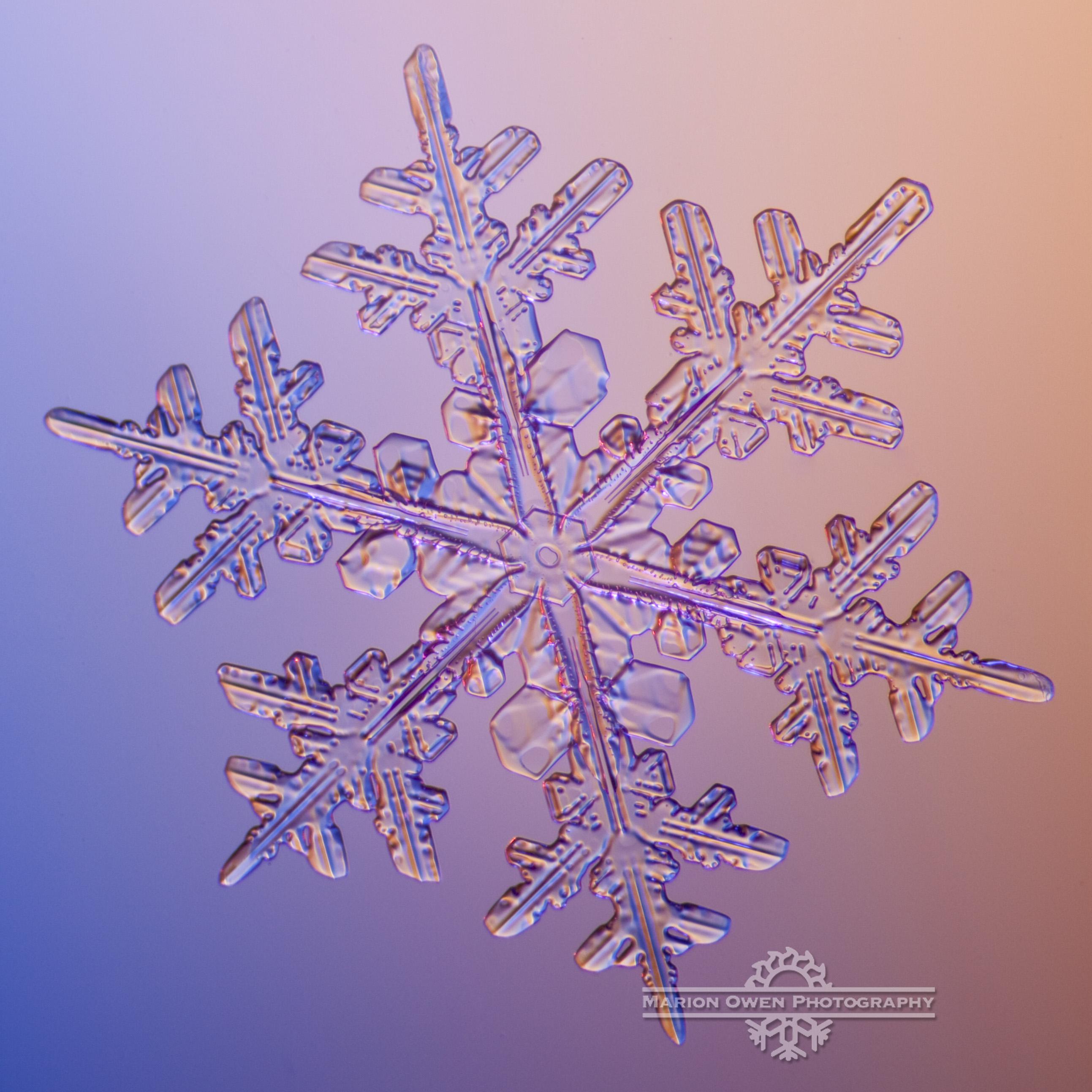 Snowflake, snow crystal, winter, ice, Alaska, Kodiak, photograph, macro, microscope