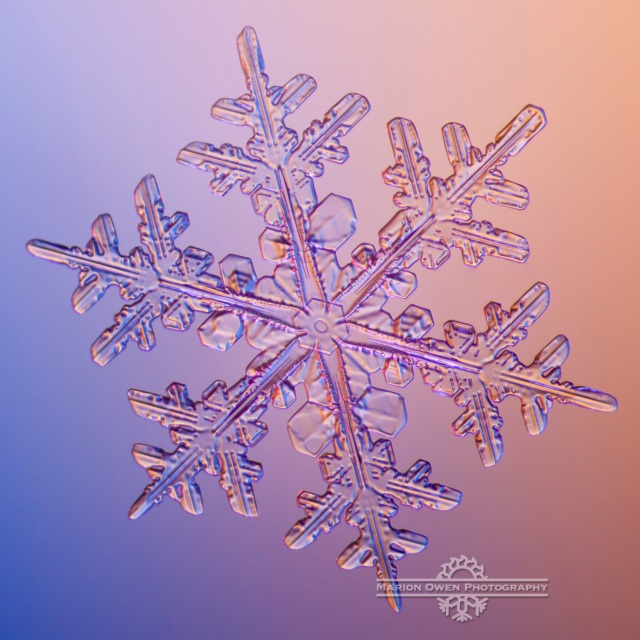 Snowflake, snow crystal, winter, ice, Alaska, Kodiak, photograph, macro, microscope