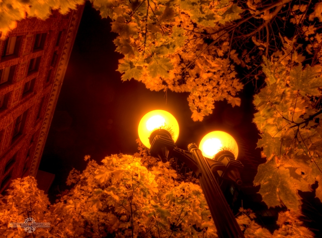 Seattle, leaves, lights, streetlights, buildings, street, lamps, washington, puget sound, lanterns, warmth, light, glow, sky