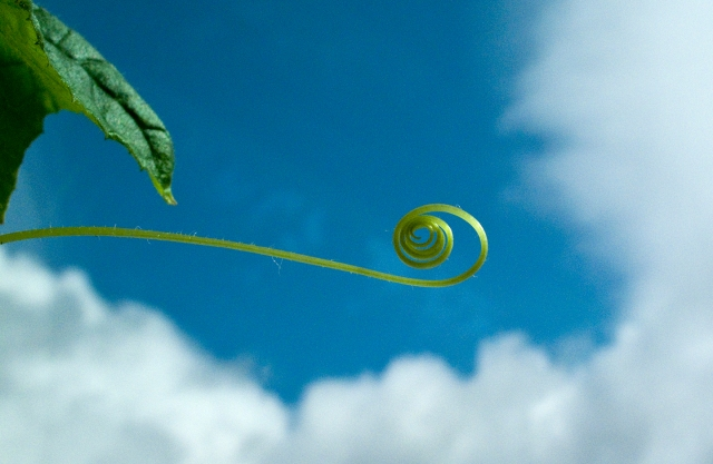 seedling, tendril, clouds