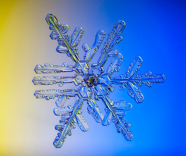Snowflake, snow, snow crystal, photograph, real snowflake