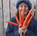 carrots, garden, harvest, organic