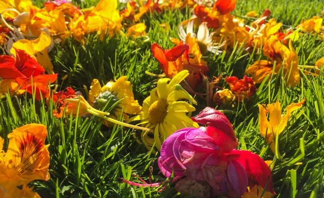 lawn, grass, mulch, organic gardening, gardening tips, fall, late summer, compost