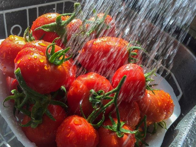 tomatoes, tomato, homegrown, organic, vegetable, garden, alaska