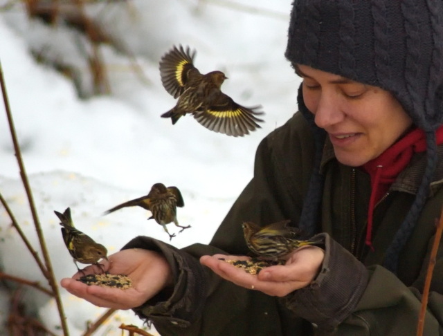 LA Holmes feeding Pine Siskins out of her hand in Homer, Alaska.