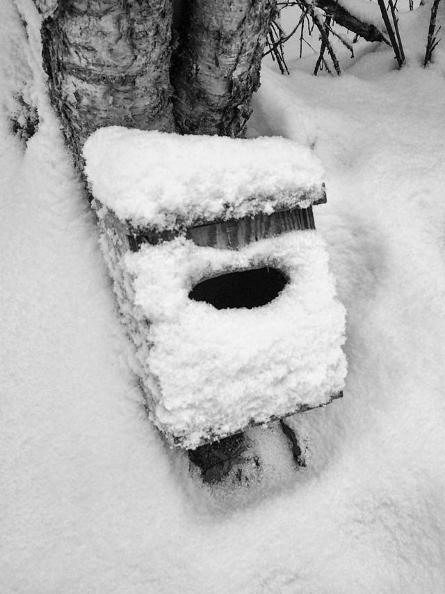 snow, bird house, alaska, landscape