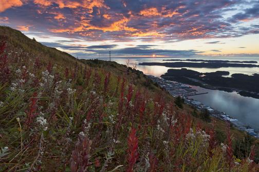 seasons, fireweed, Alaska, Kodiak, sunrise