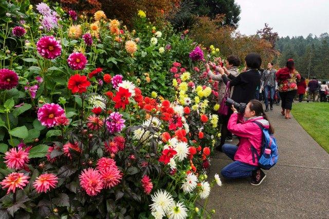 dahlia, flowers, photography, Butchart Gardens, Victoria
