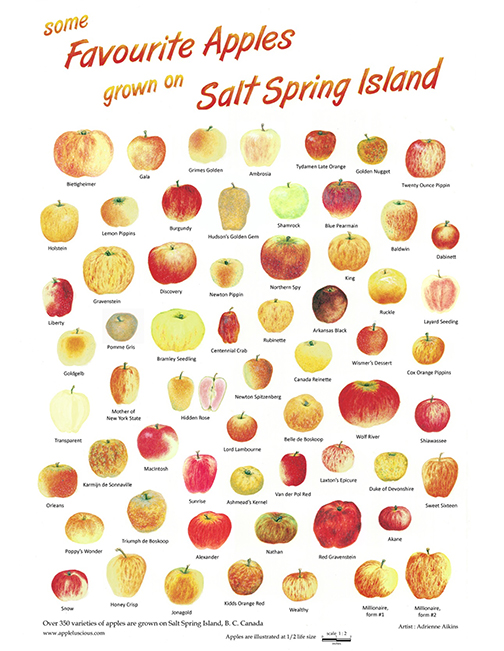 Salt spring island, apples, orchard, Canada, BC