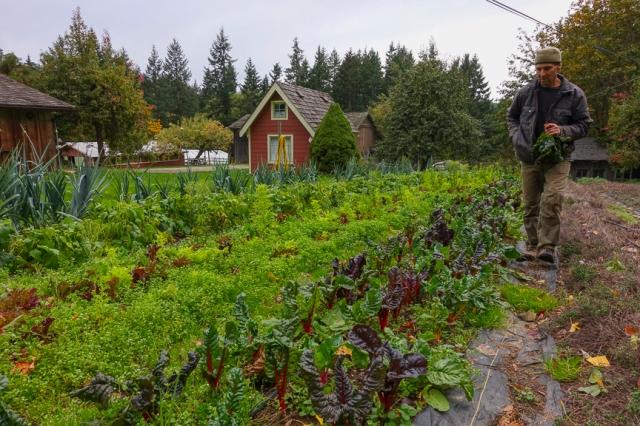 carrot, organic, garden