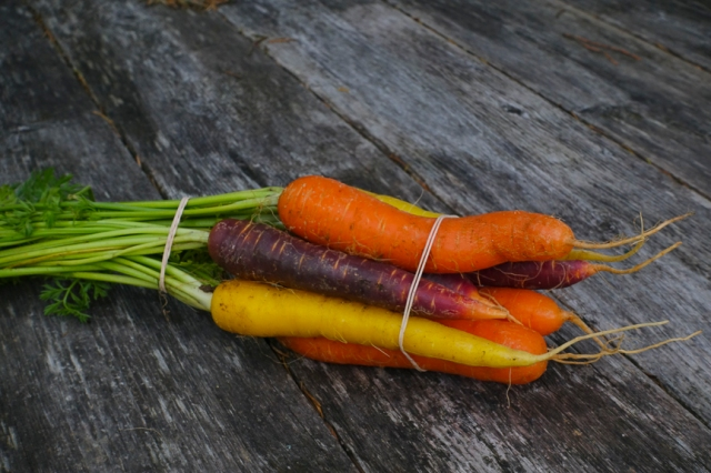 Carrots, color, organically grown