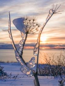 Ice dancer forms on branch in Kodiak, Alaska