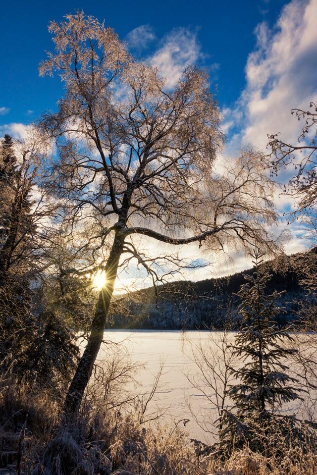 Alaska, snow, hoarfrost, tree, lake, sunrise