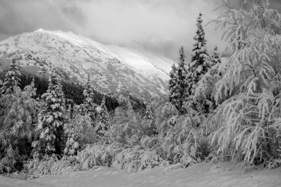 Hoarfrost, mountain, trees, black and white, B&W, Alaska, white, winter