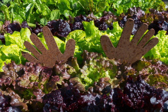 A salad garden (and helping hands) in Kodiak, Alaska. Photo by Marion Owen