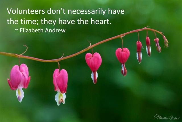 hearts, bleeding, flowers, volunteers, Elizabeth Andrew, Marion Owen, photo, hospice
