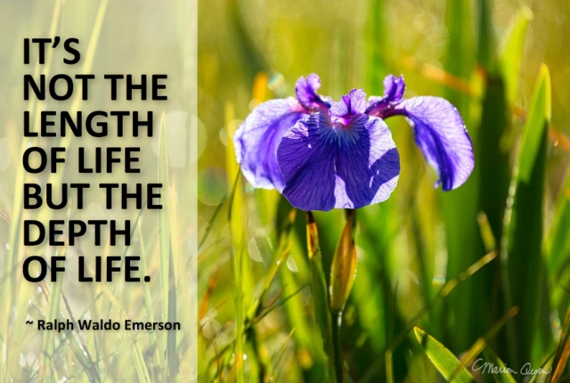 Depth of life, Ralph Waldo Emerson, Marion Owen, photo, iris, flower