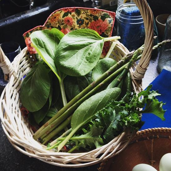 garden, vegetables, greenhouse, Homer, Alaska