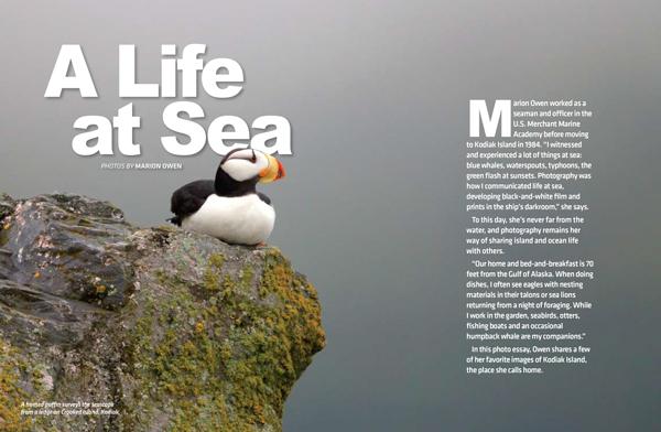 Puffins, horned puffins, photograph, photo, photography, Alaska Magazine, Alaska, ocean, sea, Marion Owen