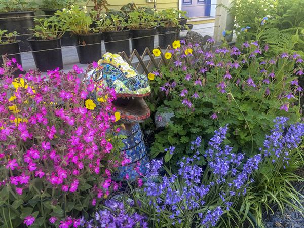 perennial, plants, summer, organic, Alaska, garden, Marion Owen