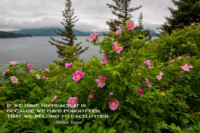 posters, peace, prayer, quote, quotations, photograph, Kodiak, Alaska, Marion Owen, Mother Teresa, roses