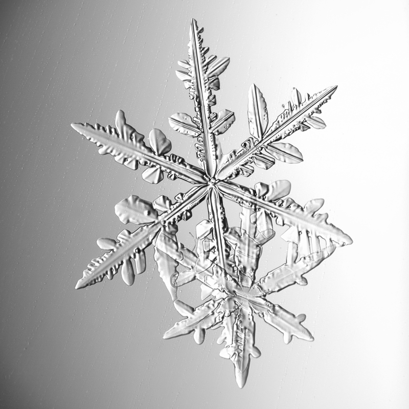 snowflake, snow crystal, real snowflake, photography, macro, winter, snow, Alaska, Marion Owen, Kodiak