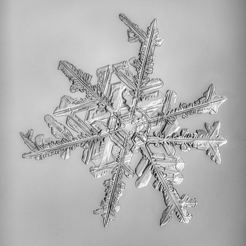snowflake, snow crystal, real snowflake, photography, macro, winter, snow, Alaska, Marion Owen, Kodiak, black and white