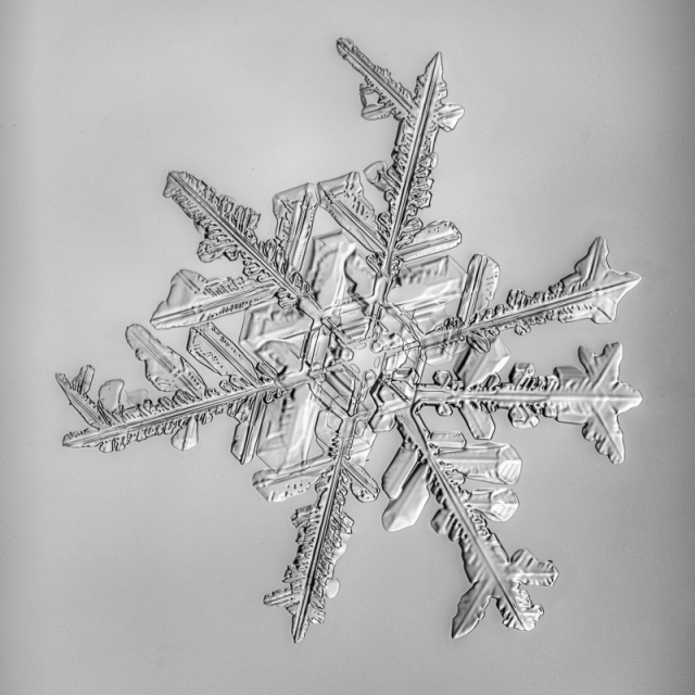 snowflake, snow crystal, real snowflake, photography, macro, winter, snow, Alaska, Marion Owen, Kodiak, black and white