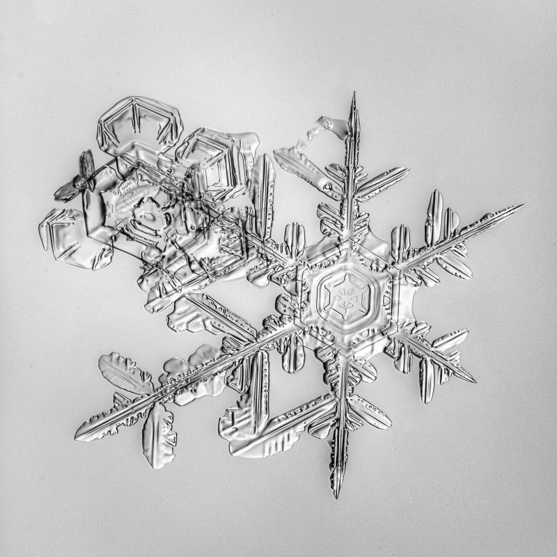 snowflake, snow crystal, real snowflake, photography, macro, winter, snow, Alaska, Marion Owen, Kodiak, B&W