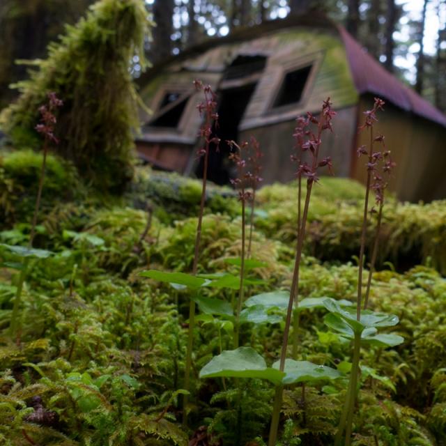 Quonset, WWII, World War 2, Kodiak, Alaska, moss, spruce forest, orchids, Long Island, prayer, peace