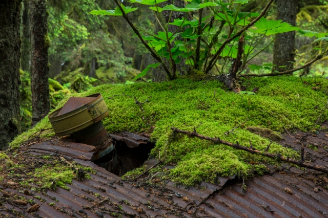 Quonset, WWII, World War 2, Kodiak, Alaska, moss, spruce forest, stove, Long Island, prayer, peace