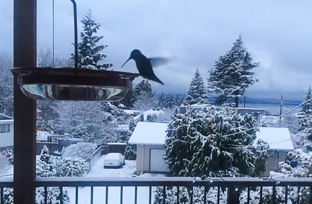 hummingbird, feeder, snow, winter, birding, iPhone, photo, photograph