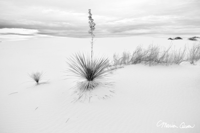 B&W, landscape, yucca, black, white, clouds