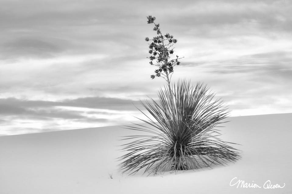 yucca, white, sands, national monument, landscape, B&W