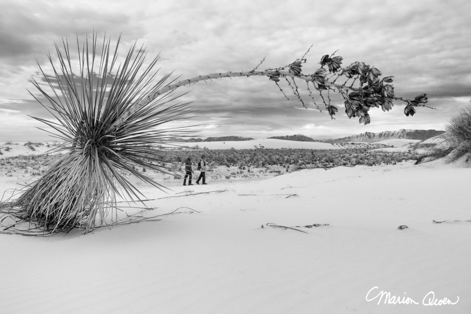B&W, yucca, portrait, landscape, perspective, white, sands, national, monument