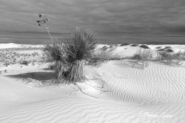 B&W, black, white, landscape, yucca, white, sands, national, monument, light, clouds